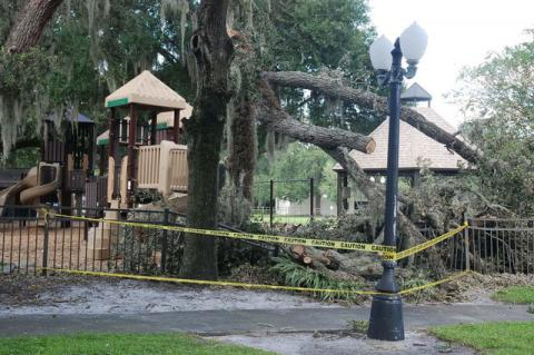 The City of Sanford was forced to close the Park on Park after a tree fell over the weekend.