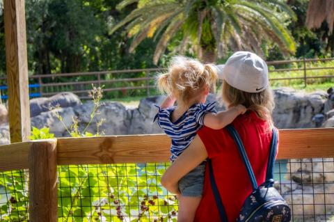 The Central Florida Zoo & Botanical Gardens is located at 3755 W. Seminole Blvd. in Sanford.